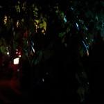 13-Grimoires en lumières